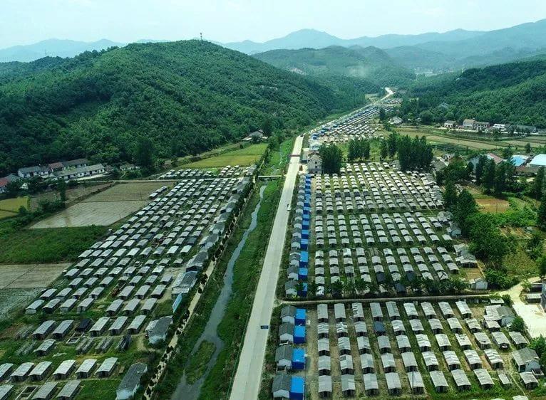 随县国家级现代农业香菇